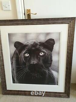 Large framed picture Shadow Hunter by Clive Meredith hand signed 96 x 89 cm